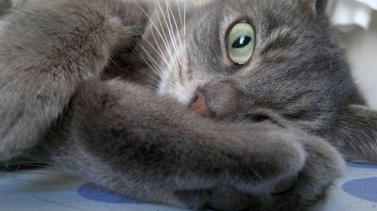 Калейдоскоп, Потерявшийся в Швеции кот нашёлся во Франции | Потерявшийся в Швеции кот нашёлся во Франции