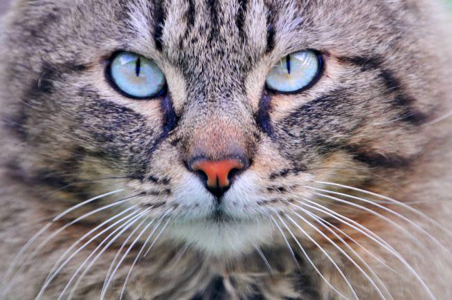 Калейдоскоп, Героические коты Финляндии | Героические коты Финляндии
