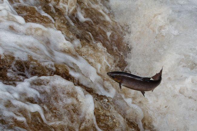 Бизнес, Верит ли норвежский лосось в гомеопатию ? | Верит ли норвежский лосось в гомеопатию ?