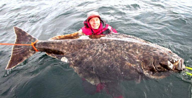 Калейдоскоп, Швед поймал рекордного палтуса | Швед поймал рекордного палтуса