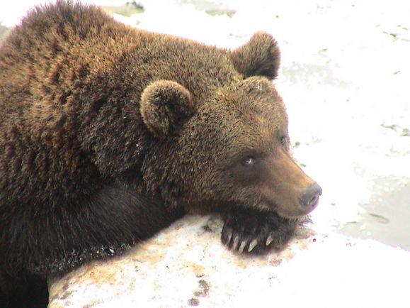 Калейдоскоп, Норвежцев призвали собирать медвежьи экскременты и cдавать их властям   Норвежцев призвали собирать медвежьи экскременты и cдавать их властям