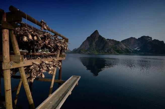 Бизнес, Норвегия поставила новый рекорд по экспорту рыбы | Норвегия поставила новый рекорд по экспорту рыбы