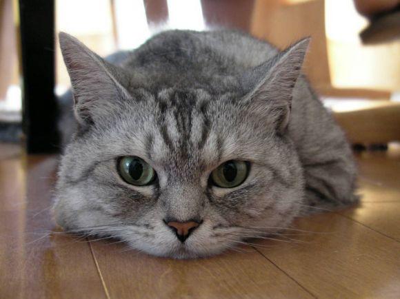 Калейдоскоп, Шведская кошка нашлась через десять лет после того, как потерялась | Шведская кошка нашлась через десять лет после того, как потерялась