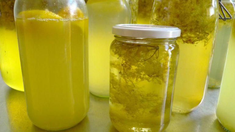 Рецепты, Elderflower cordial или Fläderblomssaft - шведский лимонад из бузины и лимонов | Elderflower cordial или Fläderblomssaft - шведский лимонад из бузины и лимонов