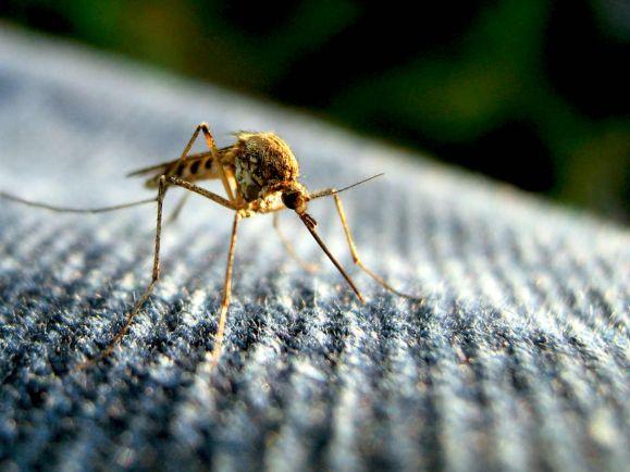 Калейдоскоп, Глобальное потепление грозит Исландии появлением комаров | Глобальное потепление грозит Исландии появлением комаров