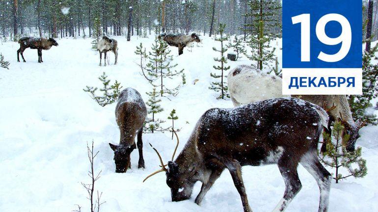 Декабрь, 19 | Календарь знаменательных дат Скандинавии