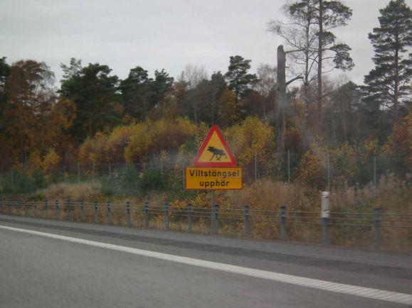 Калейдоскоп, В Швеции автомобиль сталкивается с животным каждые 12 минут | В Швеции автомобиль сталкивается с животным каждые 12 минут