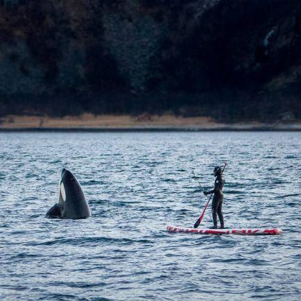 Туризм, Испанский фотограф нырнул в море к норвежским китам-убийцам | Испанский фотограф нырнул в море к норвежским китам-убийцам