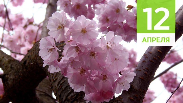 Апрель, 12 | Календарь знаменательных дат Скандинавии
