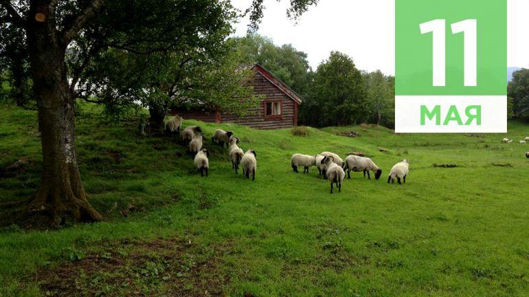 Май, 11   Календарь знаменательных дат Скандинавии