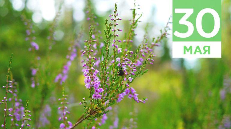 Май, 30 | Календарь знаменательных дат Скандинавии